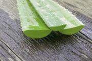 Aloe vera, planta panaceu. 5 beneficii ale plantei aloe vera pentru par