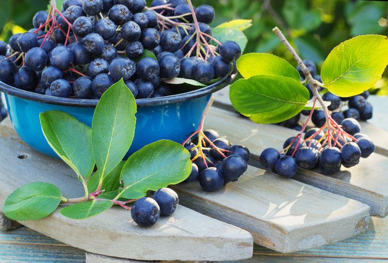 Revolutia fructelor de aronia pe piata romaneasca