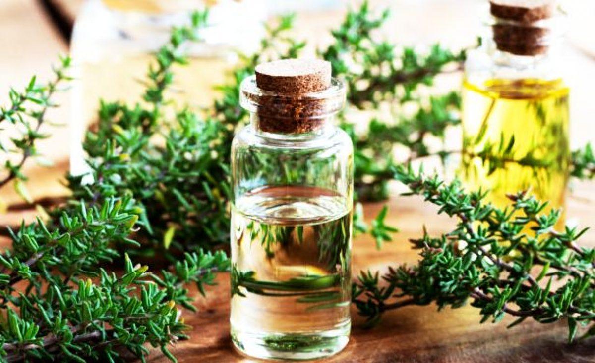 La ce este util cimbrul si uleiul de cimbru?