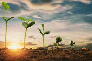 Cum poți trăi verde? – informații despre modul în care îți poți schimba viața